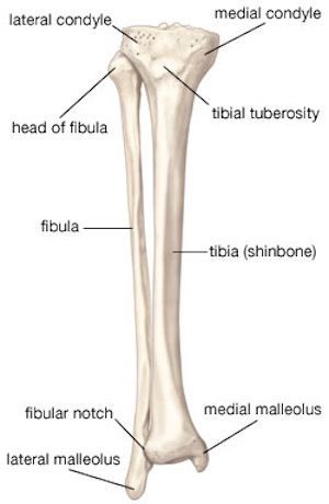 Recovery Plan For Broken Leg Joints Tibia Or Fibula Moriarty